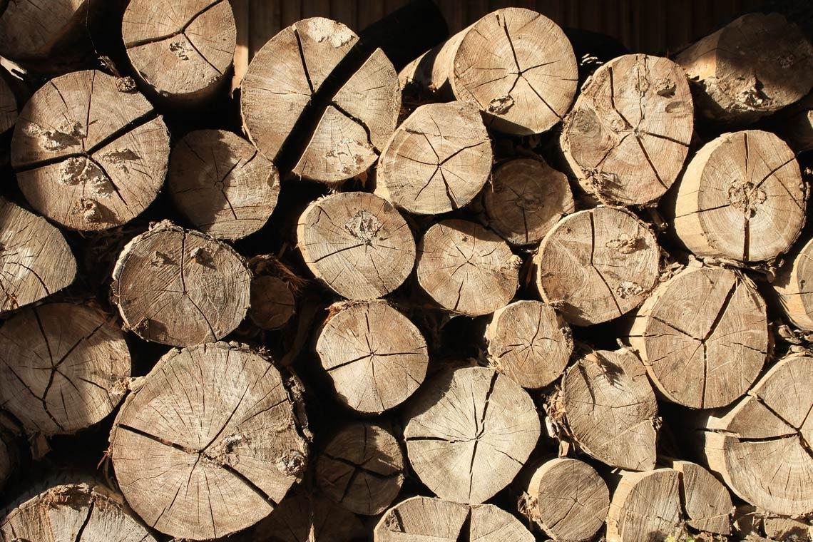 Nuevos procesos de fabricación textil: La madera de haya