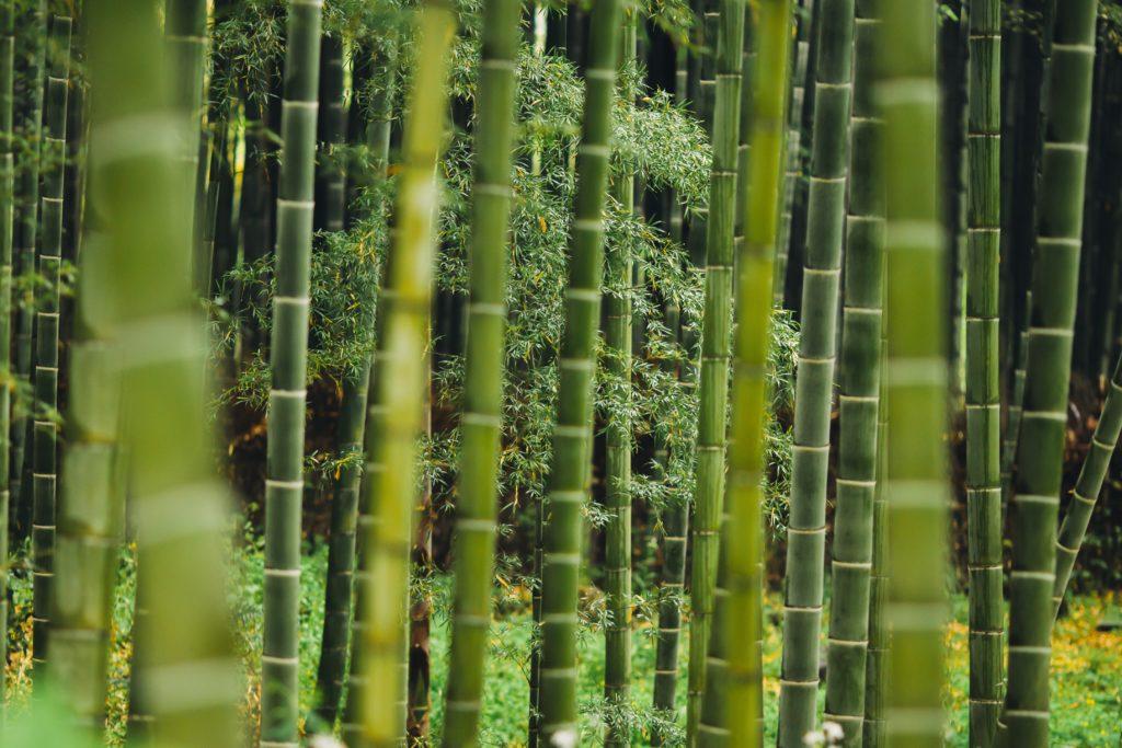 tallo de bambu