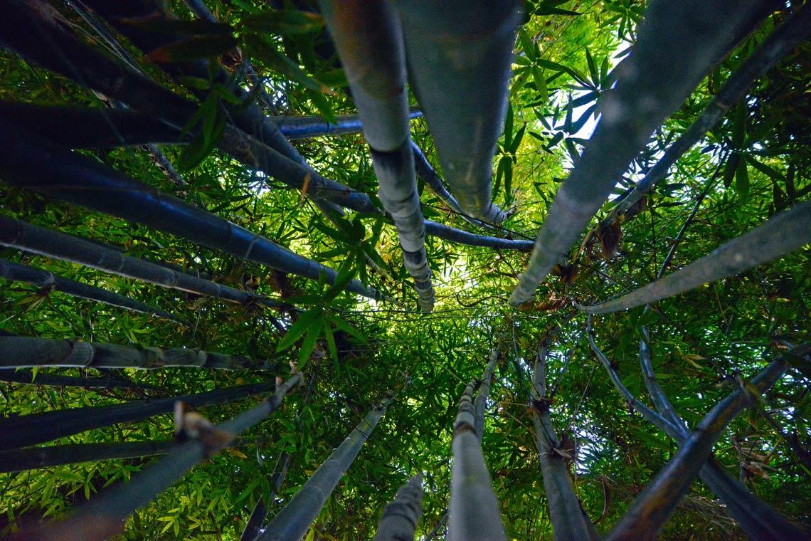 La sostenibilidad de la ropa a base de tallo de bambú